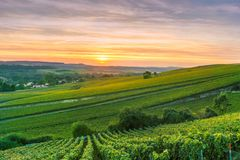 Scenic landscape in the Champagne at sunrise time, Vineyards in the Montagne de Reims. France Stock Photos