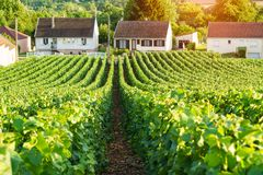 Scenic landscape in the Champagne, Vineyards in the Montagne de Reims stock photography