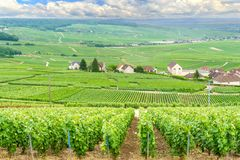Scenic landscape in the Champagne, Vineyards in the Montagne de Reims stock image