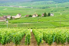 Scenic landscape in the Champagne, Vineyards in the Montagne de Reims Royalty Free Stock Image