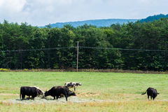 Scenic Landscape of Elkton, Virginia around Shenandoah National Stock Photography