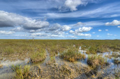 Scenic landscape Florida Everglades Stock Images