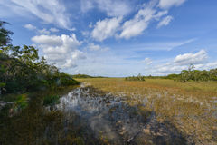 Scenic landscape Florida Everglades Royalty Free Stock Image
