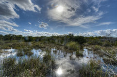 Scenic landscape Florida Everglades Stock Photography