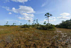 Scenic landscape Florida Everglades Royalty Free Stock Photo