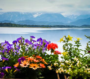 Scenic landscape with lake and flowers in Bavaria Stock Photos