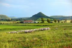 Scenic landscape of meadow in Sardinia. Scenic landscape of a yellow and green meadow in Sardinia Stock Photos