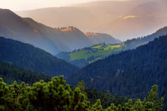 Scenic landscape of mixed pine and deciduous forest in South Tyrol, Renon/Ritten region, Italy Stock Images
