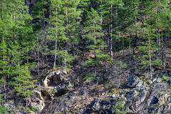 Scenic landscape with mountain forest Stock Photography
