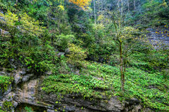 Scenic landscape with mountain forest Stock Images