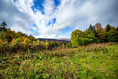Scenic landscape with mountain forest Royalty Free Stock Images