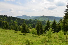 Scenic landscape with mountains, forest and meadow. Stock Photography