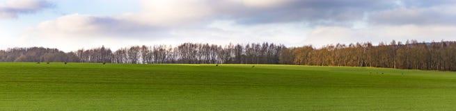 Scenic Landscape near Bad Frankenhausen with fleeing roe deer Royalty Free Stock Image