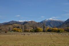 Scenic landscape, New Zealand Stock Image