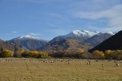Scenic landscape, New Zealand Royalty Free Stock Photo