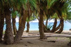 Scenic landscape of palm trees, turquoise water and tropical beach, Vai, Crete. Royalty Free Stock Images