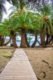 Scenic landscape of palm trees, turquoise water and tropical beach, Vai, Crete. Stock Photos