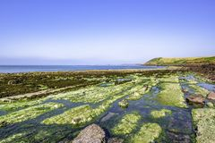 Scenic landscape of Pembrokeshire coast, Uk.Sea weed covering rocks during low tide.Colourful and diverse rocky beach on. Amazing scenery of dramatic royalty free stock images