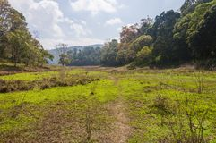 Scenic landscape of Periyar National Park, Thekkady, Kerala, India. This amazing wildlife park is located in Kerala southern state of India. Sprawled over an royalty free stock photography