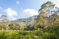 Scenic landscape of Periyar National Park, Thekkady, Kerala, India. This amazing wildlife park is located in Kerala southern state of India. Sprawled over an royalty free stock image