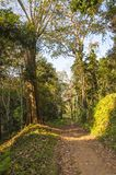 Scenic landscape of Periyar National Park, Thekkady, Kerala, India. This amazing wildlife park is located in Kerala southern state of India. Sprawled over an stock photography