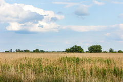 Scenic landscape photo Royalty Free Stock Images