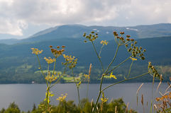 Scenic landscape with plant Anthriscus sylvestris Ravenswing Cow parsley Royalty Free Stock Image
