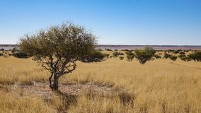 Scenic landscape of savanna in Namibia royalty free stock images
