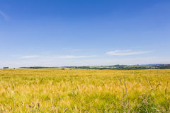 Scenic landscape Royalty Free Stock Photography