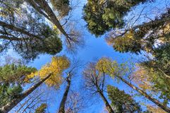 Scenic landscape of sunny autumn forest with trees reaching out blue sky. Nature background royalty free stock photos