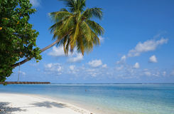 Scenic landscape of sunny tropical ocean beach with white sand, coconut palm tree and blue sky. Idyllic scenery of seaside resort. Exotic travel destination Stock Images