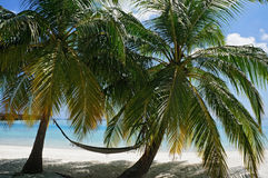 Scenic landscape of sunny tropical ocean beach with white sand, palm trees, blue sky and hammock. Idyllic scenery of seaside resor Stock Images