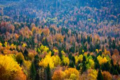 Scenic landscape with trees in mountains. Scenic landscape with trees in mountain forest in autumn stock photo