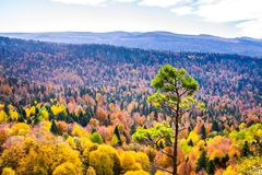 Scenic landscape with trees in mountains. Scenic landscape with trees in mountain forest in autumn stock photos