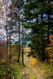 Scenic landscape with trees in forest. Scenic landscape with trees in mountain forest in autumn stock photos