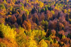 Scenic landscape with trees in mountain forest. In autumn royalty free stock photo
