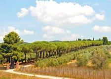 Scenic Landscape of Tuscany Stock Image