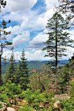 Apache-Sitgreaves National Forest, Arizona, United States. Scenic landscape view of the Apache Sitgreaves National Forest located in east central Arizona, United Stock Images