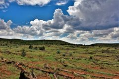 Apache-Sitgreaves National Forest, Arizona, United States. Scenic landscape view of the Apache Sitgreaves National Forest located in east central Arizona, United Royalty Free Stock Image