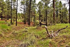 Apache-Sitgreaves National Forest, Arizona, United States. Scenic landscape view of the Apache Sitgreaves National Forest located in east central Arizona, United Stock Photo
