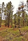 Apache-Sitgreaves National Forest, Arizona, United States. Scenic landscape view of the Apache Sitgreaves National Forest located in east central Arizona, United Royalty Free Stock Photo