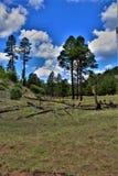 Apache-Sitgreaves National Forest, Arizona, United States Stock Image