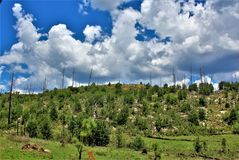 Apache Sitgreaves National Forest 2002 Rodeo-Chediski Fire Regrowth as of 2018, Arizona, United States. Scenic landscape view of the Apache Sitgreaves National Royalty Free Stock Photography