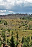 Apache Sitgreaves National Forest 2002 Rodeo-Chediski Fire Regrowth as of 2018, Arizona, United States. Scenic landscape view of the Apache Sitgreaves National Stock Photography