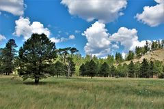 Apache Sitgreaves National Forest 2002 Rodeo-Chediski Fire Regrowth as of 2018, Arizona, United States royalty free stock photos