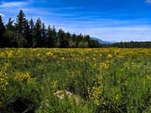 Scenic landscape with wild flowers. Trees, mountains, background, sky, blue, green, vibrant, yellow, clouds, day, sunny, bright, hiking, open, wilderness stock photos