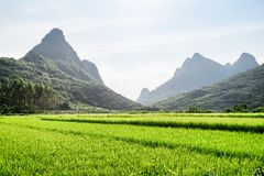 Scenic landscape at Yangshuo County of Guilin, China. Wonderful view of bright green rice field and beautiful karst mountains on blue sky background. Yangshuo royalty free stock photography