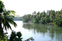 Scenic landscapes of rivers. Scenic landscapes of river flowing through palm trees forest Stock Photography