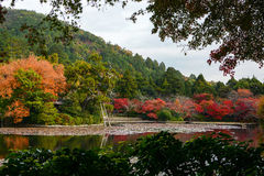 Scenic lily pond surrounded by red maple trees in full fall color in Kyoto, Japan Royalty Free Stock Photography