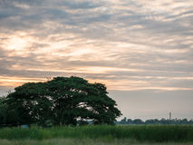 Scenic lonely big tree on a meadow with sunrise, landscape Royalty Free Stock Images